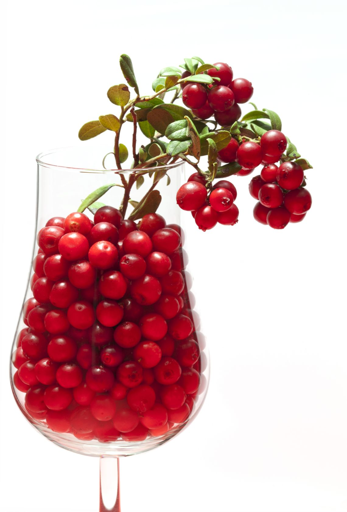 Lingonberries-for-weight-loss