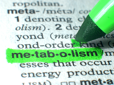 what-is-metabolism